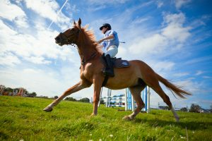 Jockey preparing his horse for a big race